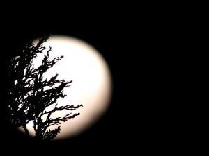 moon-544210