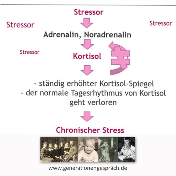 Chronischer Stress ist Nebennierenstress - ständig zu viel Kortisol im Blut www.generationengespräch.de