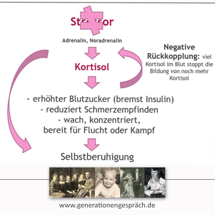 Stressbewältigung: Kortisol bremst sich selbst www.generationengespräch.de